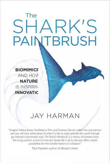 The Sharks Paintbrush Jay Harman